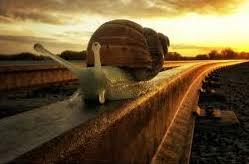 escargot sur un rail